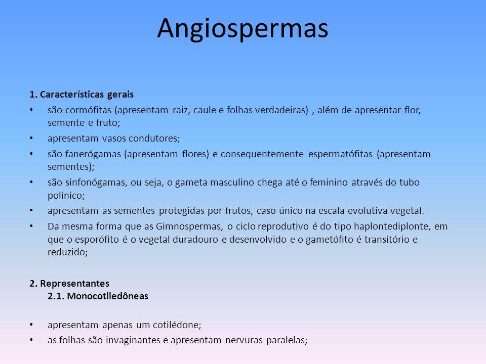 Angiospermas 1. Características gerais são cormófitas (apresentam raiz, caule e folhas verdadeiras), além de apresentar flor, semente e fruto; apresen