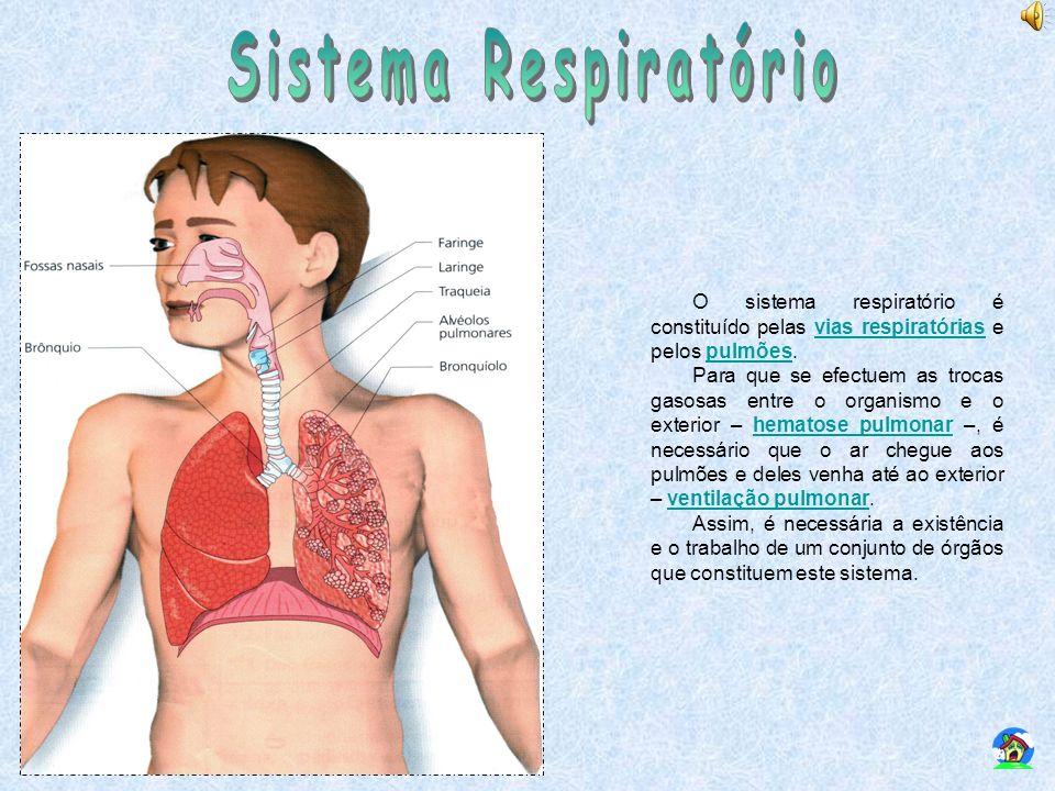 O sistema respiratório é constituído pelas vias respiratórias e pelos pulmões.vias respiratóriaspulmões Para que se efectuem as trocas gasosas entre o