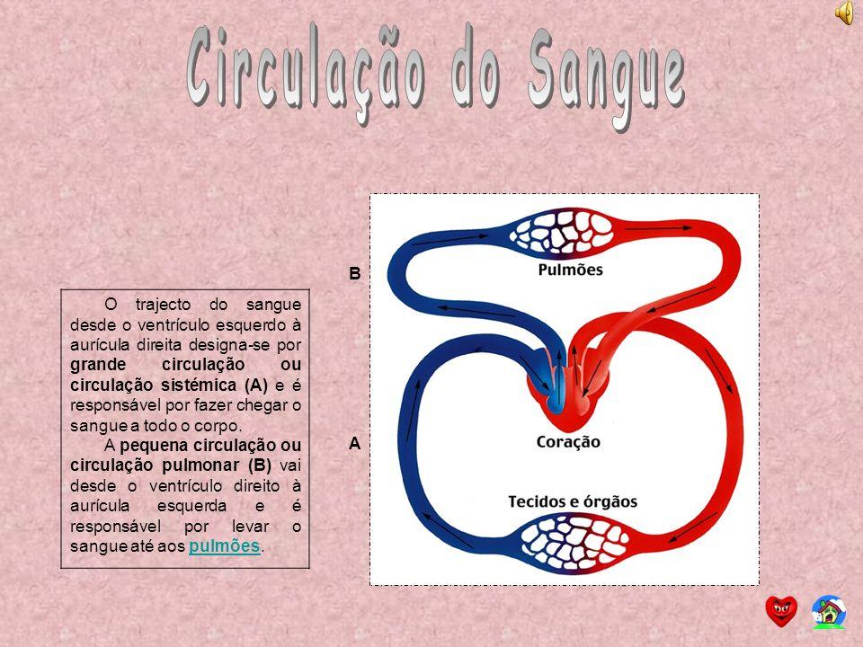 O trajecto do sangue desde o ventrículo esquerdo à aurícula direita designa-se por grande circulação ou circulação sistémica (A) e é responsável por f