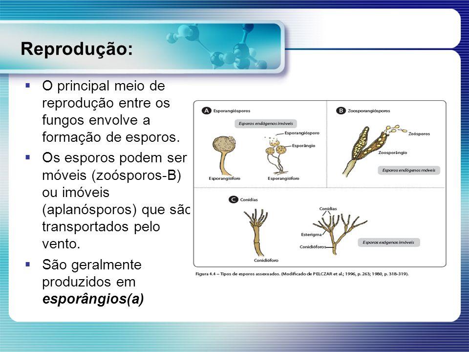 Reprodução: O principal meio de reprodução entre os fungos envolve a formação de esporos. Os esporos podem ser móveis (zoósporos-B) ou imóveis (aplanó