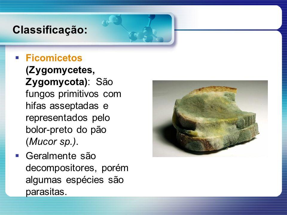 Classificação: Ficomicetos (Zygomycetes, Zygomycota): São fungos primitivos com hifas asseptadas e representados pelo bolor-preto do pão (Mucor sp.).