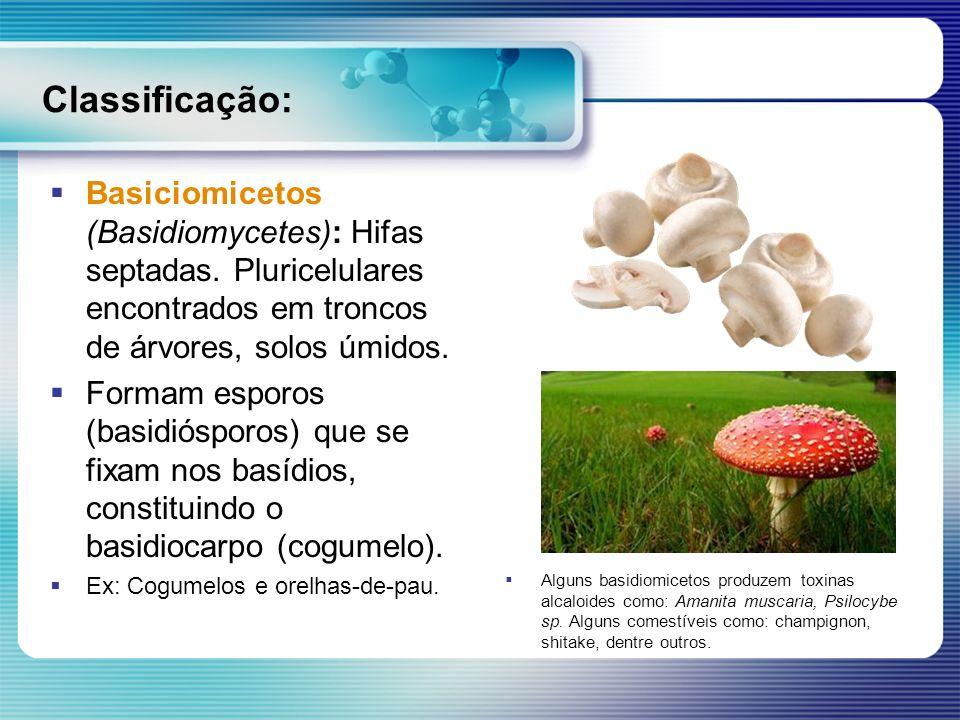 Classificação: Basiciomicetos (Basidiomycetes): Hifas septadas. Pluricelulares encontrados em troncos de árvores, solos úmidos. Formam esporos (basidi