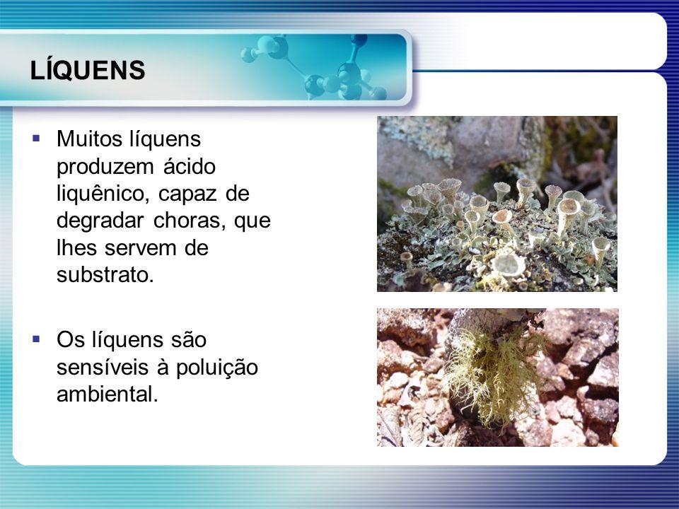 LÍQUENS Muitos líquens produzem ácido liquênico, capaz de degradar choras, que lhes servem de substrato. Os líquens são sensíveis à poluição ambiental