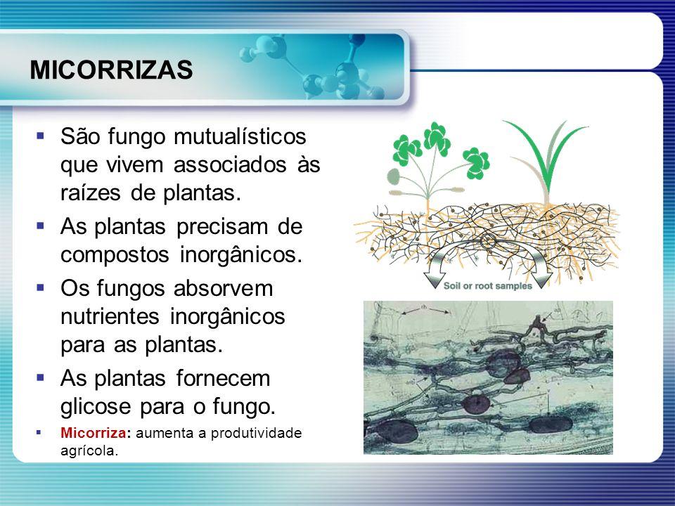 MICORRIZAS São fungo mutualísticos que vivem associados às raízes de plantas. As plantas precisam de compostos inorgânicos. Os fungos absorvem nutrien