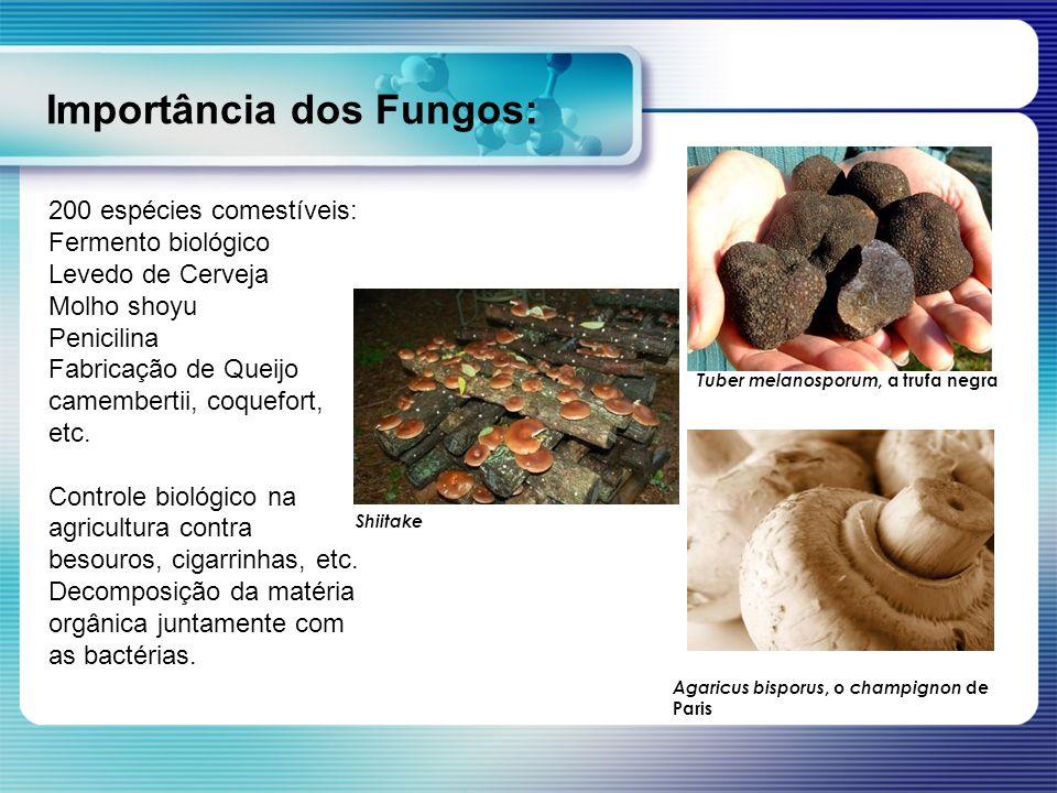 Importância dos Fungos: 200 espécies comestíveis: Fermento biológico Levedo de Cerveja Molho shoyu Penicilina Fabricação de Queijo camembertii, coquef