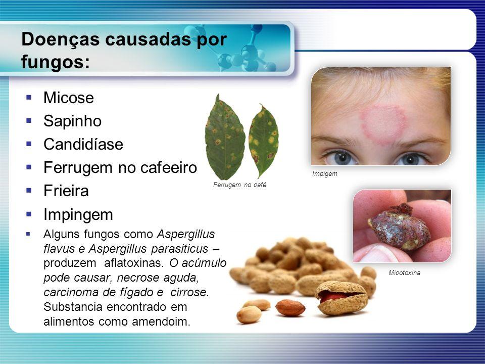 Doenças causadas por fungos: Micose Sapinho Candidíase Ferrugem no cafeeiro Frieira Impingem Alguns fungos como Aspergillus flavus e Aspergillus paras