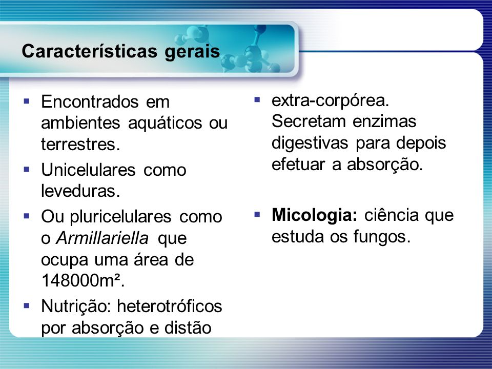 Características gerais Encontrados em ambientes aquáticos ou terrestres. Unicelulares como leveduras. Ou pluricelulares como o Armillariella que ocupa