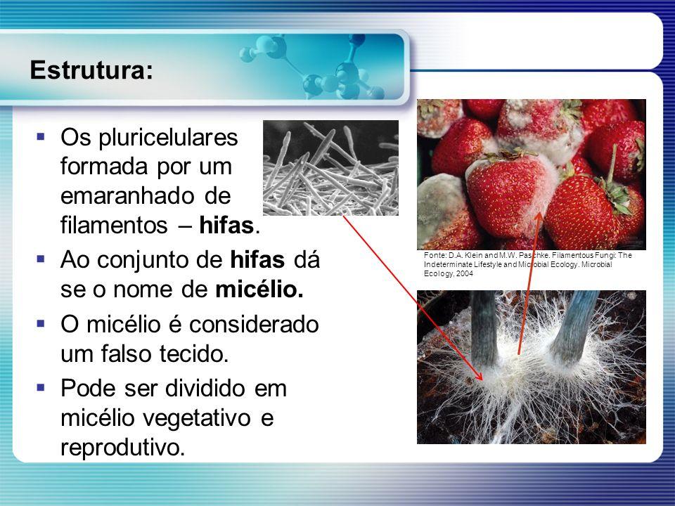 Estrutura: Os pluricelulares formada por um emaranhado de filamentos – hifas. Ao conjunto de hifas dá se o nome de micélio. O micélio é considerado um