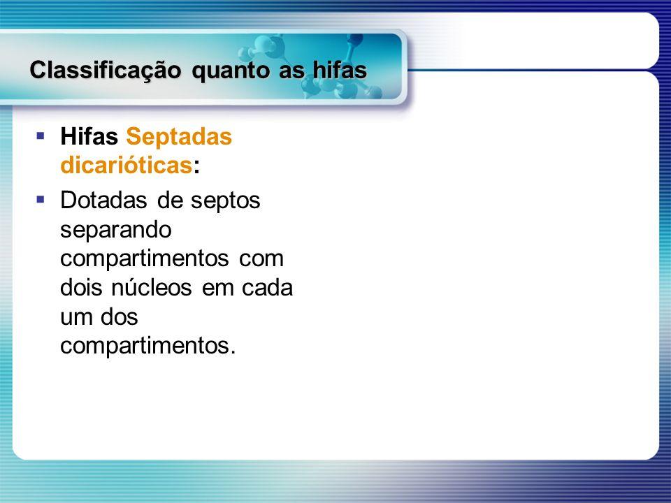 Classificação quanto as hifas Hifas Septadas dicarióticas: Dotadas de septos separando compartimentos com dois núcleos em cada um dos compartimentos.