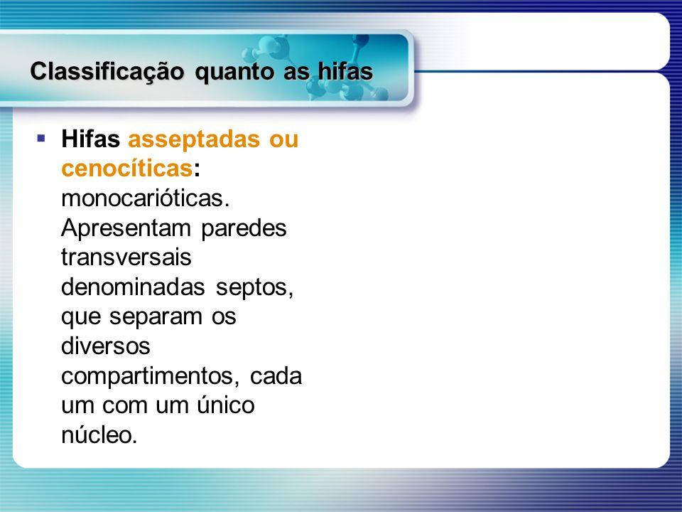Classificação quanto as hifas Hifas asseptadas ou cenocíticas: monocarióticas. Apresentam paredes transversais denominadas septos, que separam os dive