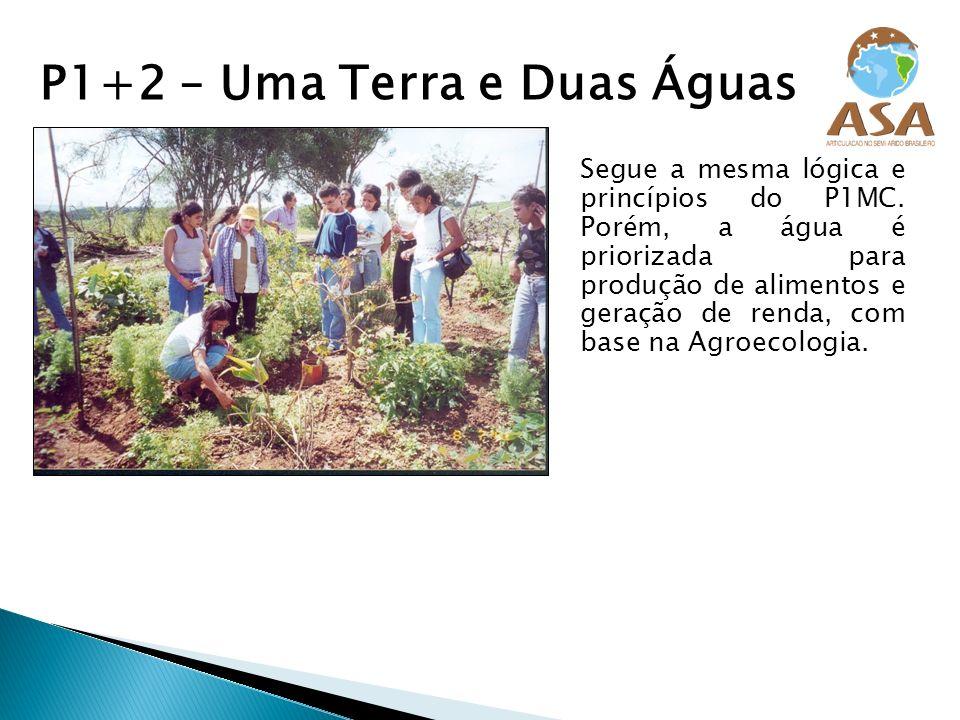 P1+2 – Uma Terra e Duas Águas Segue a mesma lógica e princípios do P1MC. Porém, a água é priorizada para produção de alimentos e geração de renda, com