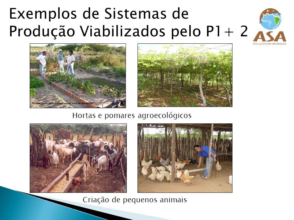 Exemplos de Sistemas de Produção Viabilizados pelo P1+ 2 Hortas e pomares agroecológicos Criação de pequenos animais