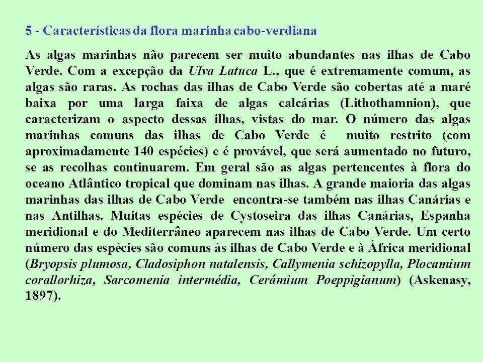 5 - Características da flora marinha cabo-verdiana As algas marinhas não parecem ser muito abundantes nas ilhas de Cabo Verde. Com a excepção da Ulva