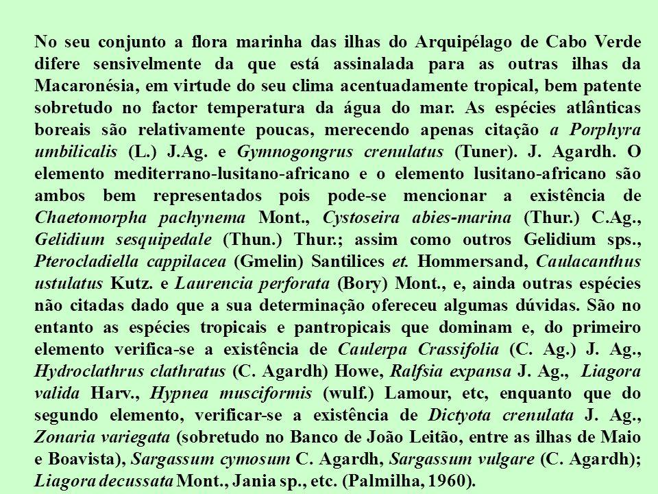 No seu conjunto a flora marinha das ilhas do Arquipélago de Cabo Verde difere sensivelmente da que está assinalada para as outras ilhas da Macaronésia