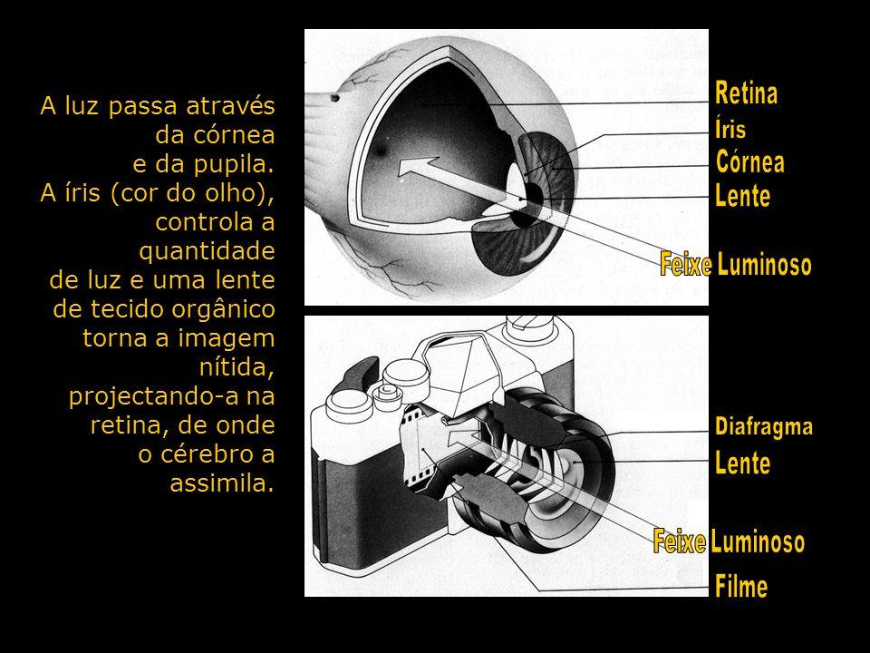 A luz passa através da córnea e da pupila. A íris (cor do olho), controla a quantidade de luz e uma lente de tecido orgânico torna a imagem nítida, pr