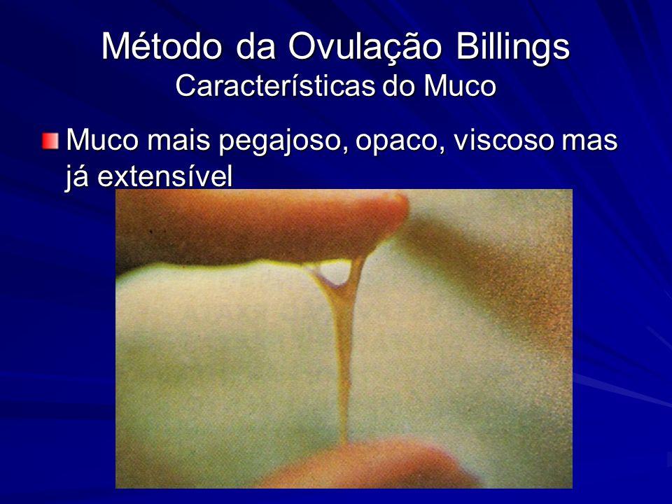 Método da Ovulação Billings Características do Muco Muco mais pegajoso, opaco, viscoso mas já extensível
