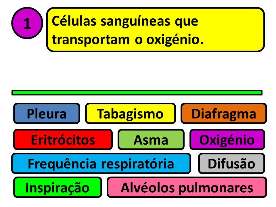 Pleura Eritrócitos Tabagismo Asma Frequência respiratória Inspiração Difusão Oxigénio Alvéolos pulmonares Diafragma Sistema Respiratório Teste de Veri