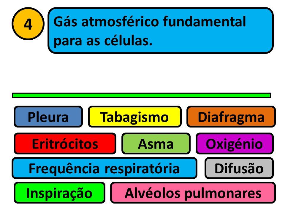 Pleura Eritrócitos Tabagismo Asma Frequência respiratória Inspiração Difusão Oxigénio Alvéolos pulmonares Diafragma 3 Membrana que envolve os pulmões.