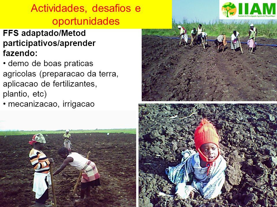 FFS adaptado/Metod participativos/aprender fazendo: demo de boas praticas agricolas (preparacao da terra, aplicacao de fertilizantes, plantio, etc) me