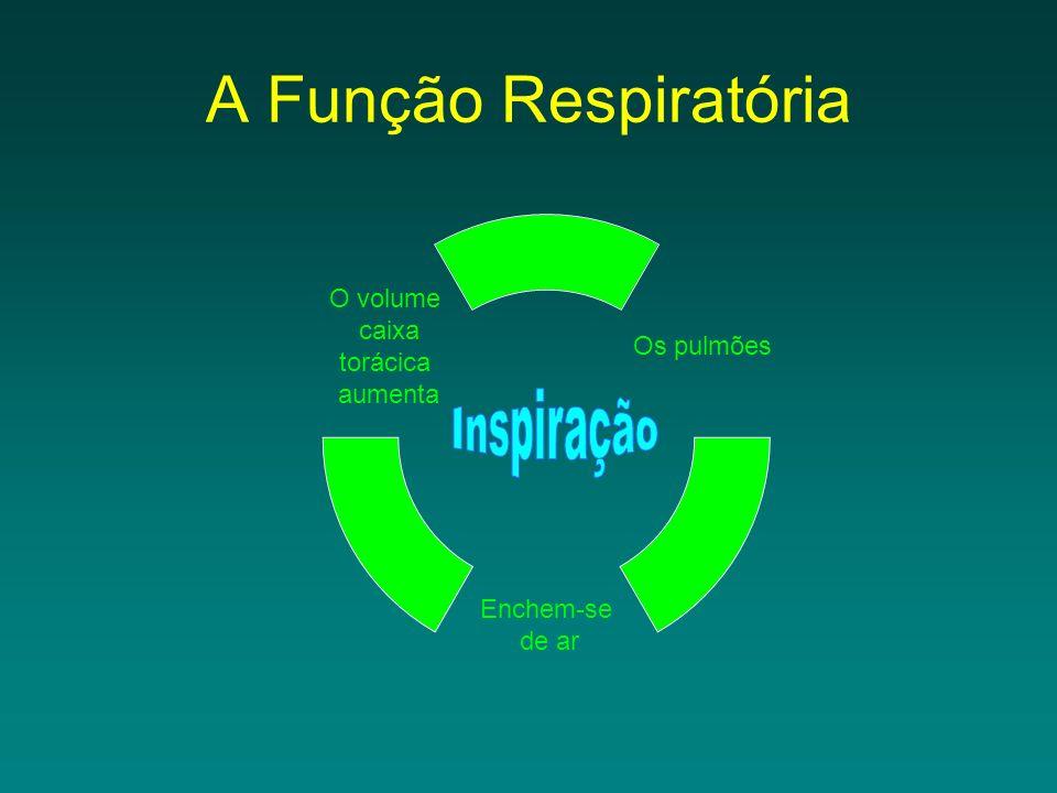 A Função Respiratória Os pulmões Enchem- se de ar O volume caixa torácica aumenta