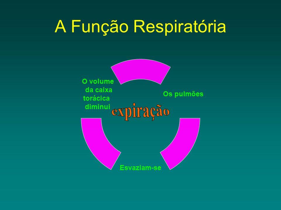 A Função Respiratória Os pulmões Esvaziam- se O volume da caixa torácica diminui