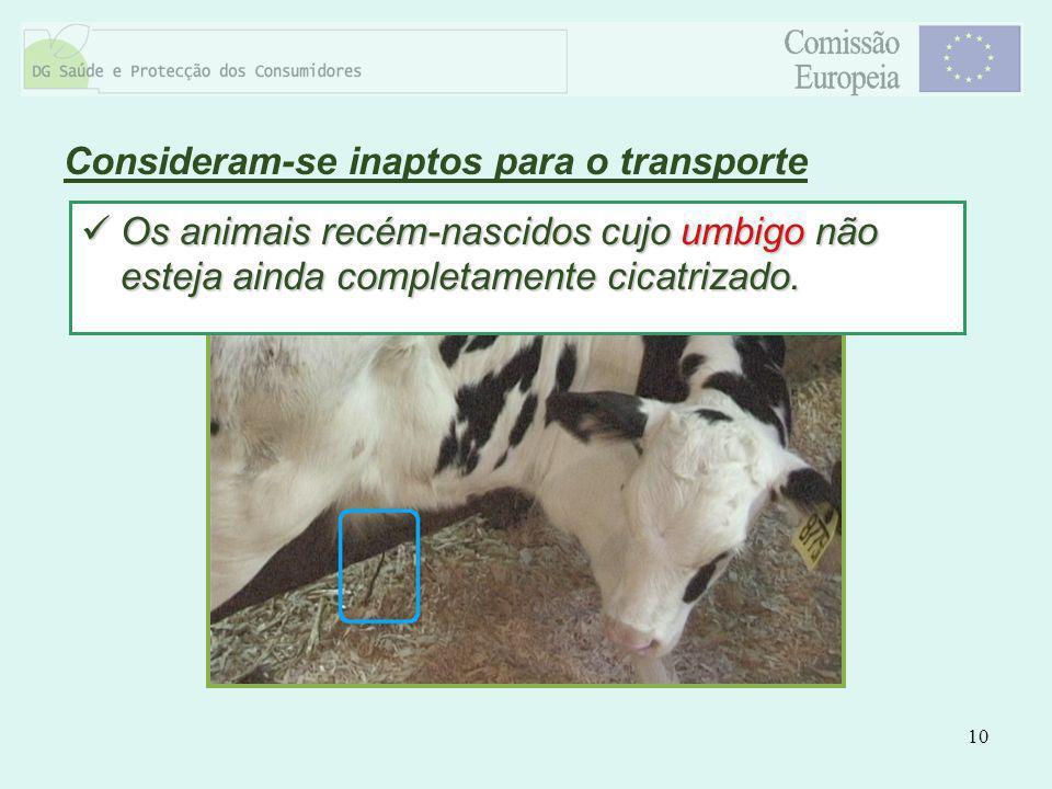10 Consideram-se inaptos para o transporte Os animais recém-nascidos cujo umbigo não esteja ainda completamente cicatrizado. Os animais recém-nascidos