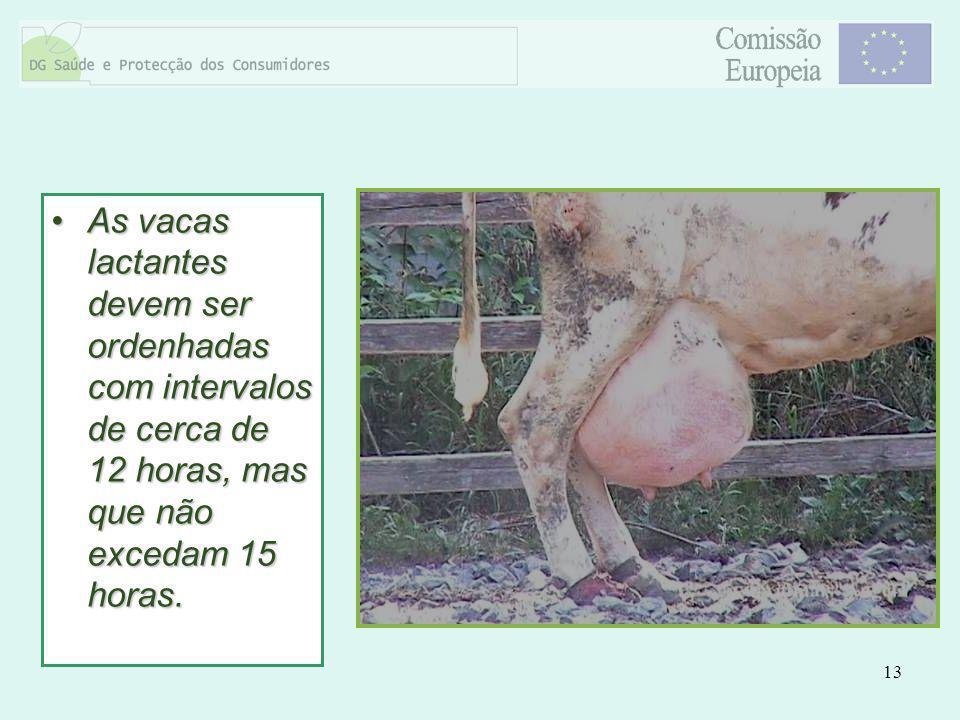 13 As vacas lactantes devem ser ordenhadas com intervalos de cerca de 12 horas, mas que não excedam 15 horas.As vacas lactantes devem ser ordenhadas c