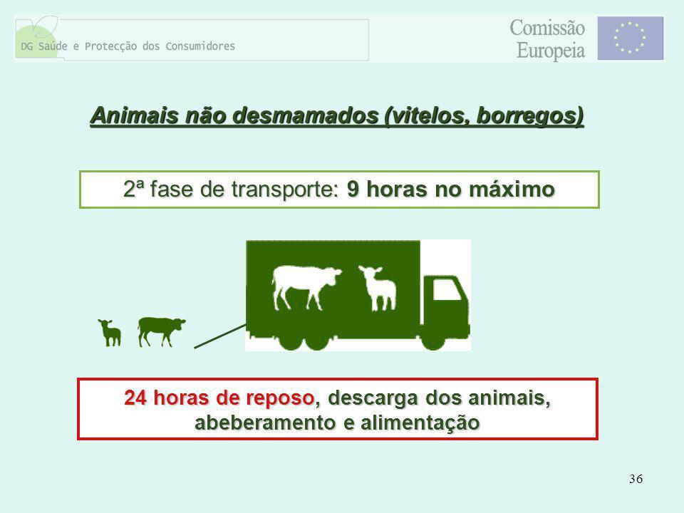 36 Animais não desmamados (vitelos, borregos) 2ª fase de transporte: 9 horas no máximo 24 horas de reposo, descarga dos animais, abeberamento e alimen