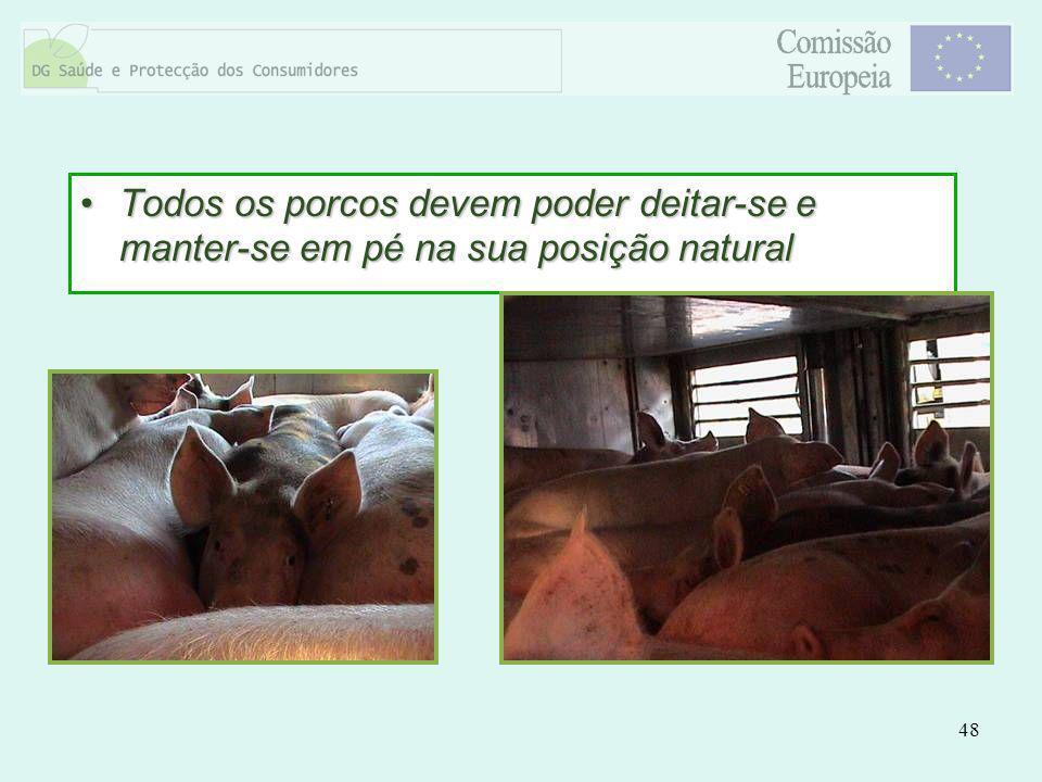 48 Todos os porcos devem poder deitar-se e manter-se em pé na sua posição naturalTodos os porcos devem poder deitar-se e manter-se em pé na sua posiçã