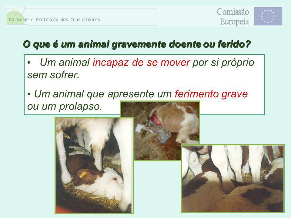 8 Um animal incapaz de se mover por si próprio sem sofrer. Um animal que apresente um ferimento grave ou um prolapso. O que é um animal gravemente doe