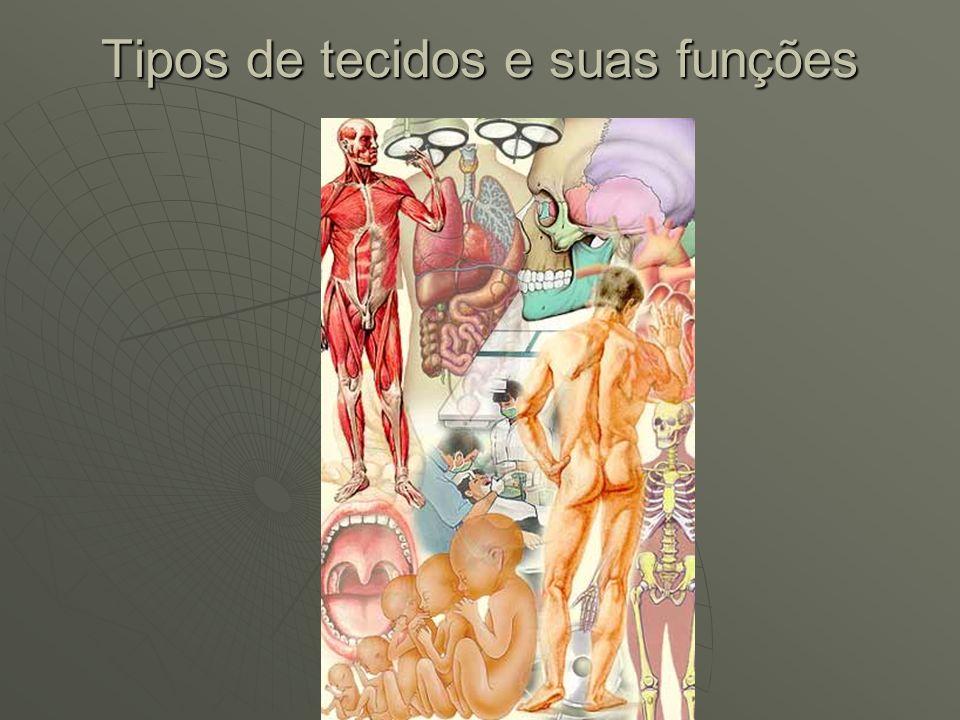 Tipos de tecidos ao longo da vida Nossa composição corporal varia, como foi mencionado, de acordo com inúmeros fatores e entre eles a idade.