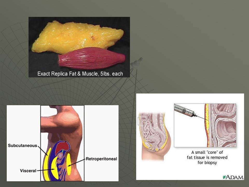 Tecidos e hormônios Insulina Insulina Glucagon Glucagon Hormônio do crescimento Hormônio do crescimento Cortisol Cortisol Testosterona Testosterona Hormônios da tireóide Hormônios da tireóide Hormônios femininos (estrógeno e progesterona) Hormônios femininos (estrógeno e progesterona) Leptina Leptina Ghrelina Ghrelina Resistina Resistina IGF-1 IGF-1 Adrenalina Adrenalina Citoquinas Citoquinas