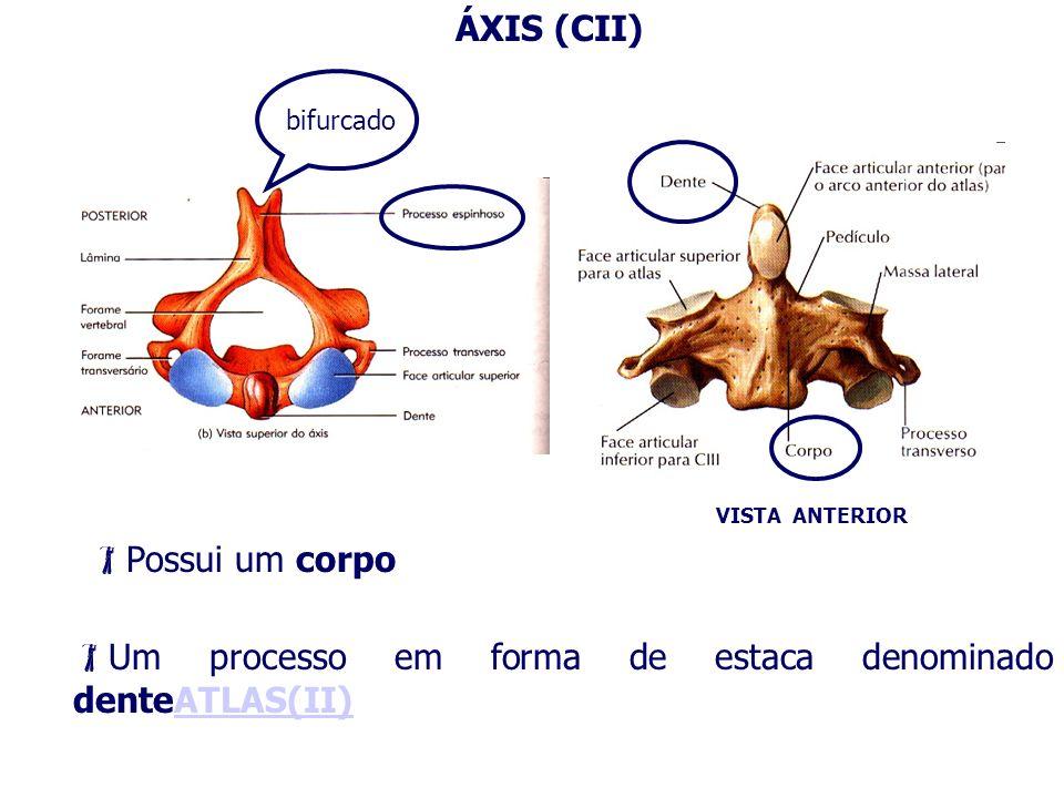 ÁXIS (CII) VISTA ANTERIOR Possui um corpo Um processo em forma de estaca denominado denteATLAS(II)ATLAS(II) bifurcado