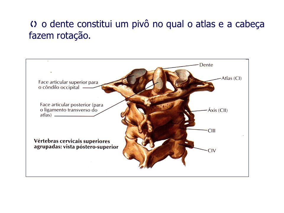 o dente constitui um pivô no qual o atlas e a cabeça fazem rotação.