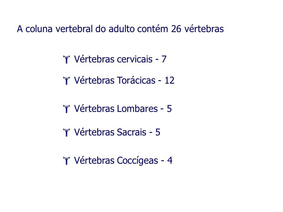 A coluna vertebral do adulto contém 26 vértebras Vértebras cervicais - 7 Vértebras Torácicas - 12 Vértebras Lombares - 5 Vértebras Sacrais - 5 Vértebr