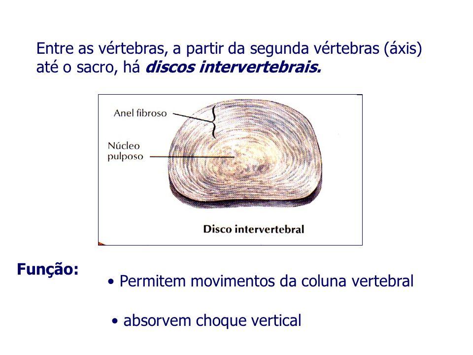 Entre as vértebras, a partir da segunda vértebras (áxis) até o sacro, há discos intervertebrais. Função: Permitem movimentos da coluna vertebral absor