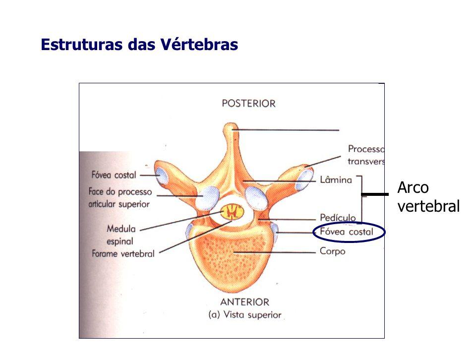 Estruturas das Vértebras Arco vertebral