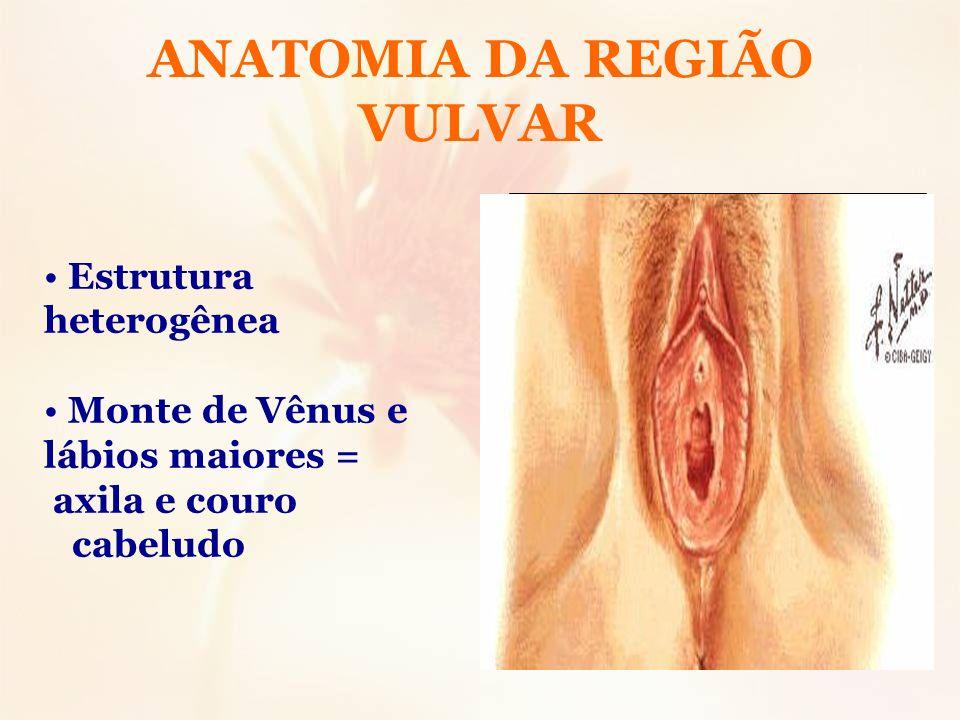 ANATOMIA DA REGIÃO VULVAR Estrutura heterogênea Monte de Vênus e lábios maiores = axila e couro cabeludo