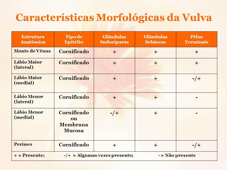 Características Morfológicas da Vulva Estrutura Anatômica Tipo de Epitélio Glândulas Sudoríparas Glândulas Sebáceas Pêlos Terminais Monte de Vênus Cor