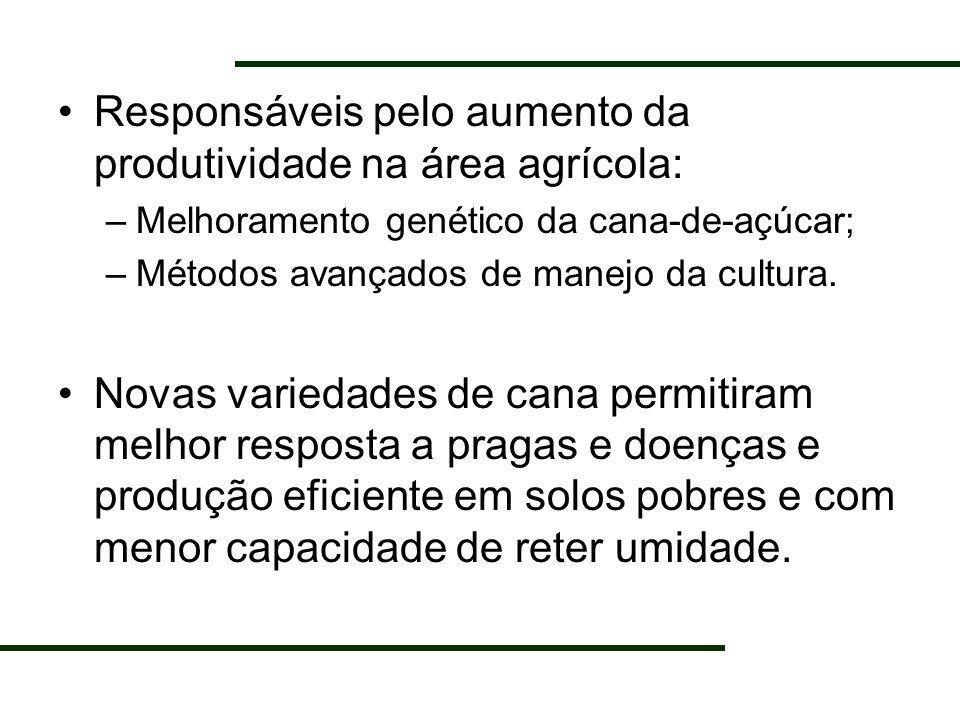 Responsáveis pelo aumento da produtividade na área agrícola: –Melhoramento genético da cana-de-açúcar; –Métodos avançados de manejo da cultura. Novas