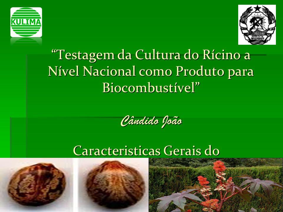 Testagem da Cultura do Rícino a Nível Nacional como Produto para Biocombustível Cândido João Caracteristicas Gerais do Rícino Caracteristicas Gerais d