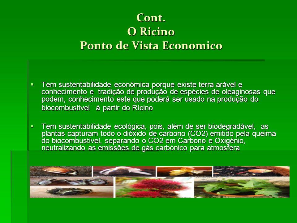 Cont. O Ricino Ponto de Vista Economico Tem sustentabilidade económica porque existe terra arável e conhecimento e tradição de produção de espécies de