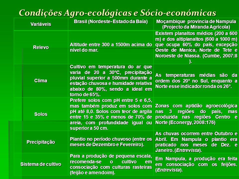Condições Agro-ecológicas e Sócio-económicas Variáveis Brasil (Nordeste- Estado da Baía) Moçambique provincia de Nampula (Projecto da Miranda Agrícola