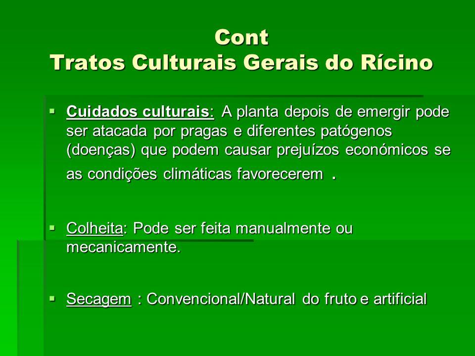 Cont Tratos Culturais Gerais do Rícino Cuidados culturais: A planta depois de emergir pode ser atacada por pragas e diferentes patógenos (doenças) que