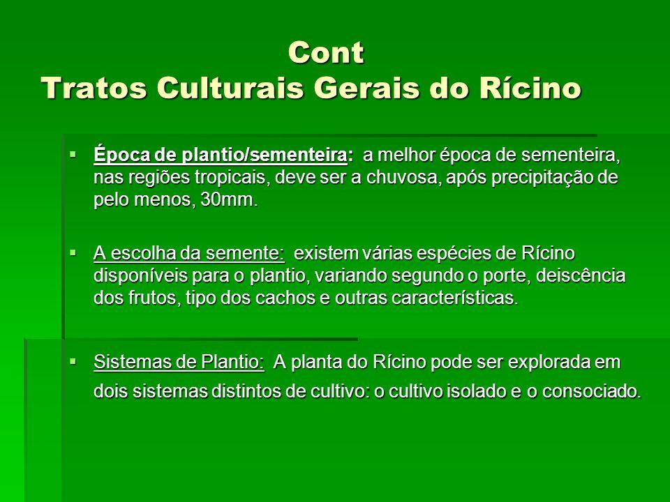 Cont Tratos Culturais Gerais do Rícino Cont Tratos Culturais Gerais do Rícino Época de plantio/sementeira: a melhor época de sementeira, nas regiões t