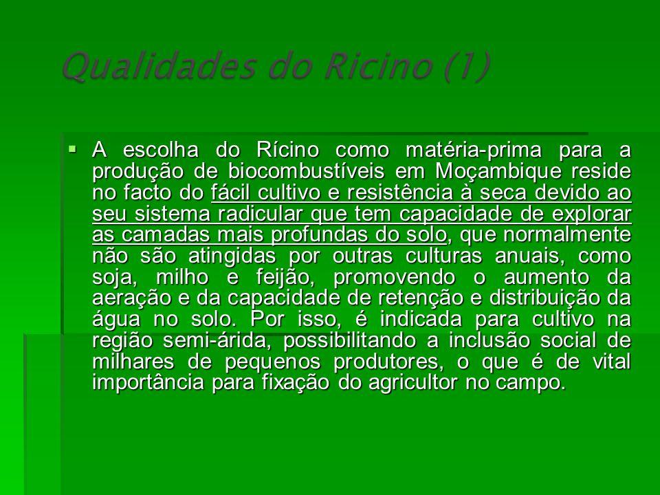 A escolha do Rícino como matéria-prima para a produção de biocombustíveis em Moçambique reside no facto do fácil cultivo e resistência à seca devido a