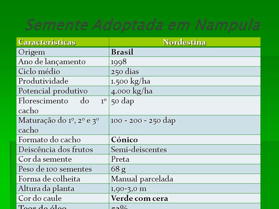 CaracterísticasNordestinaOrigemBrasil Ano de lançamento 1998 Ciclo médio 250 dias Produtividade 1.500 kg/ha Potencial produtivo 4.000 kg/ha Florescime