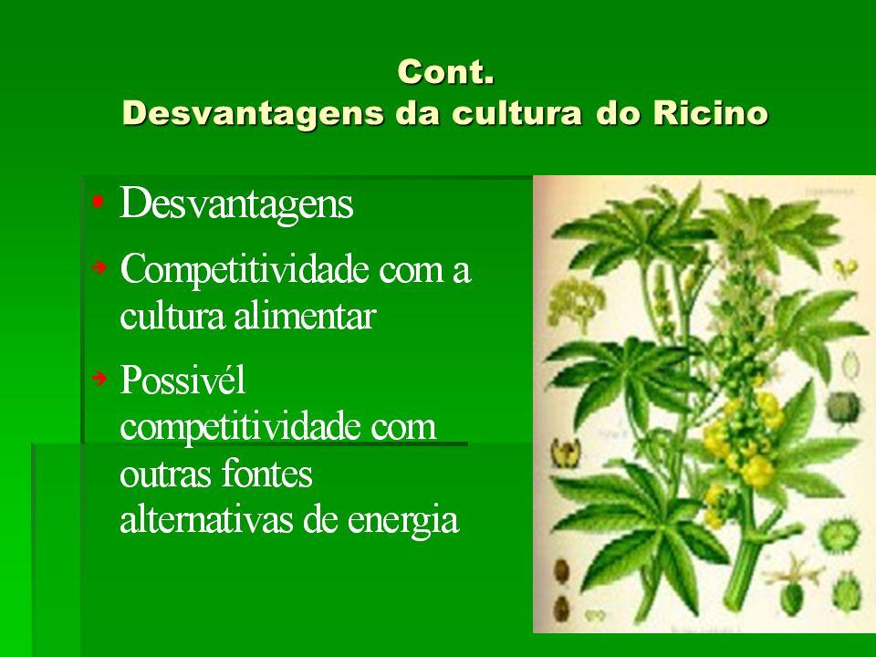 Cont. Desvantagens da cultura do Ricino