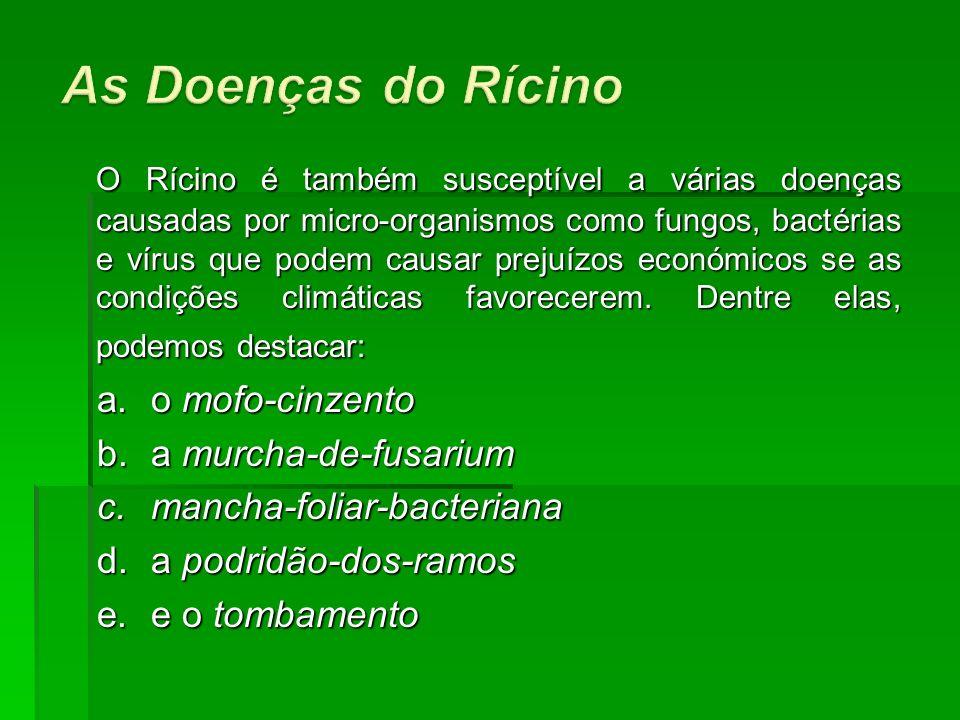 O Rícino é também susceptível a várias doenças causadas por micro-organismos como fungos, bactérias e vírus que podem causar prejuízos económicos se a