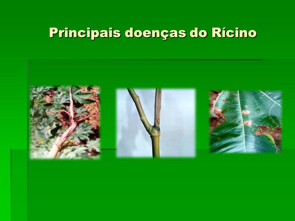 Principais doenças do Rícino Principais doenças do Rícino